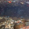 Alki Cove 2<br /> Nov 21, 2010