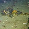Alki Cove 1<br /> Nov 14, 2010
