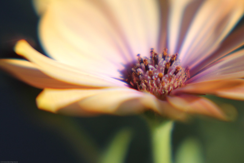 Taken with a Lensbaby lens.