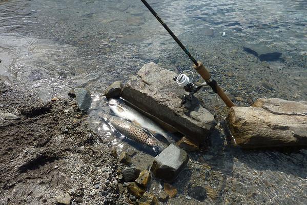 Fjellfiske