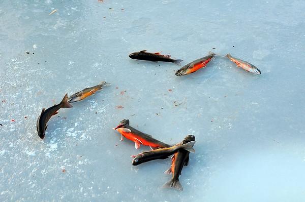 Isfiske på Vangsvatnet..