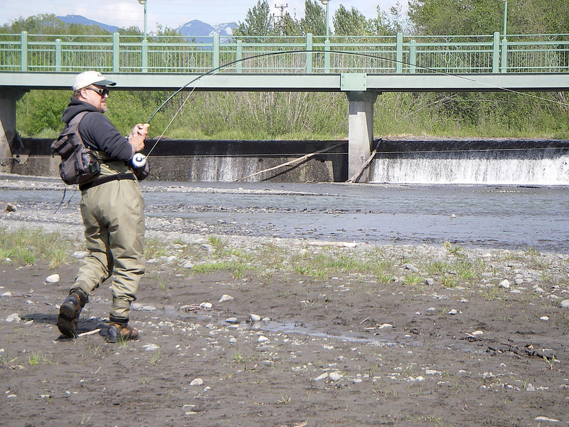 Photo courtesy of Rolland Martin.  Here I am, taking it to a King.  The common misconception is that Ship Creek is always crowded. This simply is not the case.  There is plenty of good fishing available at Ship without suffering crowds.  I had all the room in the world to play this fish and no one around except Rolland and my 3 year old, who was busy playing in the mud.  It's true that Ship Creek can at times be an absolute mad house - with snaggers and poachers plying the waters for any and every fish, but it can also provide some excellent, uncrowded fishing.  The trick is knowing when to fish, and when not to.  Thanks for the photo, Rolland.