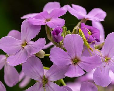 Summer Lilac & Friend