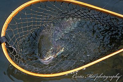 Blitzen river wild fish.