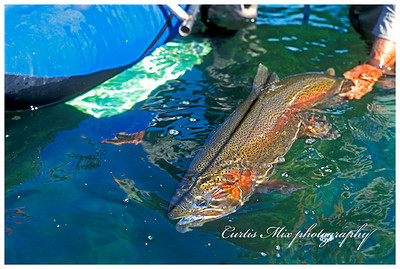 Cranebow. Crane prairie rainbow.