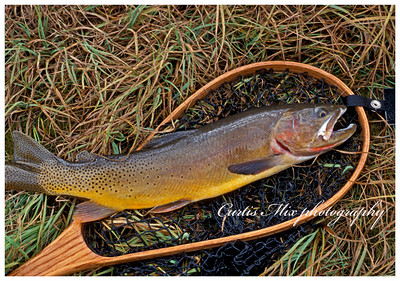 Worth the hike. I made the six mile hike to the second meadow up on slough creek. It was late in the season and I was really looking foreword to fishing hoppers. As I got there it got really windy. I ended up fishing buggers and zonkers and had my best day there.