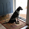 Opie, waiting for Russ to come home.