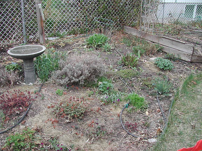 Garden in Spring during Construction