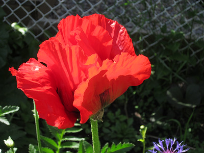 Garden summer 2014