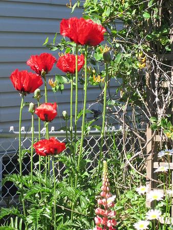 Garden summer 2015