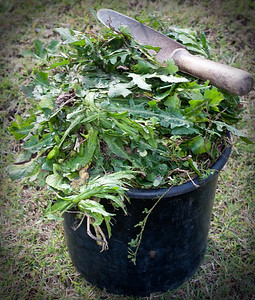 WEEDS! - Gardening in Brisbane