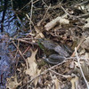 Toad at Bobby