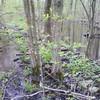 Beaver dam at Anniversary
