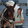 That's young Halley Legge trying to work a bit of persuasion on one of the mules.<br /> <br /> Halley has assisted with other Moon Walks over the years, and Amy Ballard tells us that because of Halley's experience with mules, she was recruited to assist Glenn Ryan in working with the animals for the August Moon Walk.