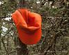 An orange hat was also at the summit