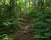 The trail still isn't overly steep, but that will soon change