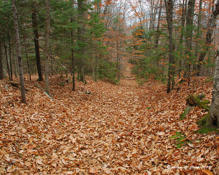 Back down on to the easy old woods roads