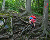 Climbing up the roots