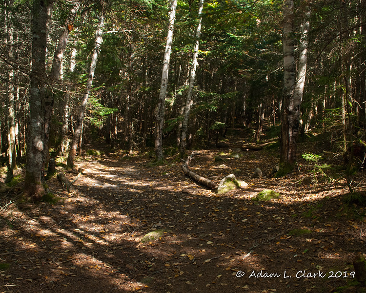 Just after leaving the Nancy Pond Trail, the herd path bears left here