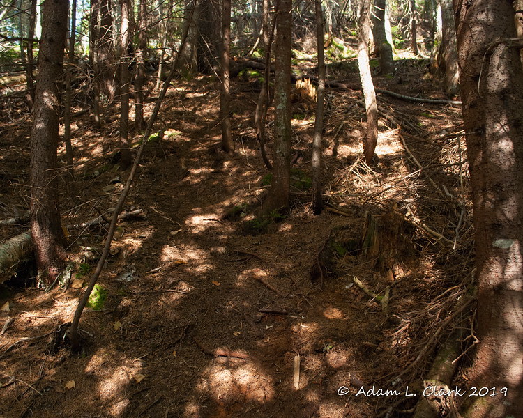 Following the herd path up over lots of spruce needles on the ground