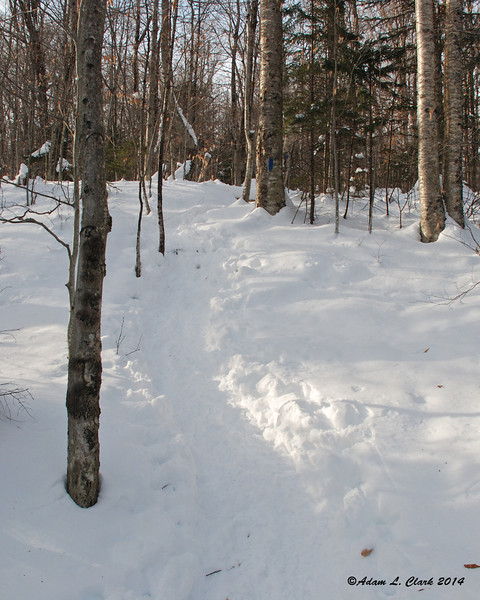 Coming up the Mt. Pemigewasset Trail, this is about how steep it gets