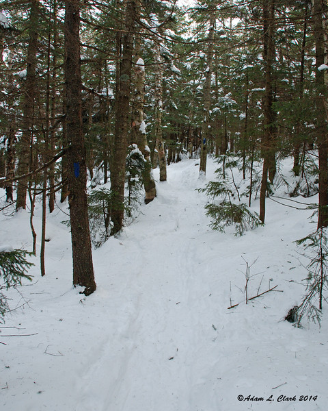 Nearing the top, the trail enters the conifers