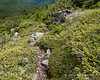 Above treeline, the bushwhack out to Fort Mtn is easy to follow