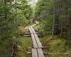 More bog bridges