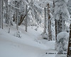 Walking through a snow covered forest