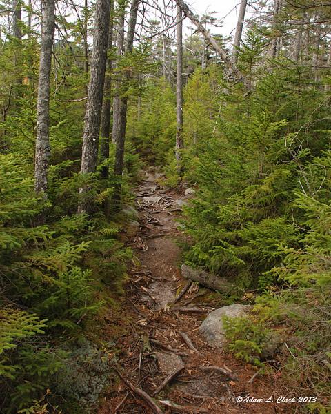 On the ridge headed towards Jennings Peak, the trail was pretty gentle