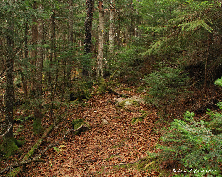 More gentle trail as I pass Jennings Peak spur on the way to Sandwich Dome