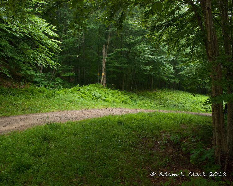 Looking back down the Brookway ski trail.  This trail has an access road on it which makes for easy walking
