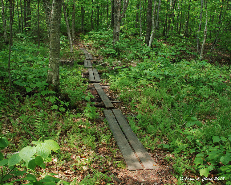 Bog bridges leading over a muddy area almost back to the trail head