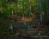 Where the trail for Ripley Falls branches off, the Ethan Pond Trail gets a series of wooden steps as it climbs uphill