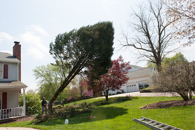 Landscaping & Tree Removal