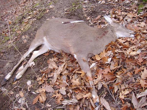 Hunting 2006