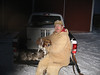 Joe Schueler with Zeke and Buddy and four rabbits shot near Rochester MN on Jan. 22, 2009.