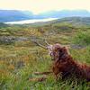 """Fin dag på fjedle med snart 13 år gamle """"Hunting Tuck""""..."""