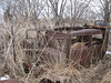Old car bodies and weeds add up to excellent rabbitat. Gunless hunting near Simpson, Minn., on March 18, 2007.