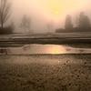 Jan 8 2012 Unusual fog in northern suburbs of Atlanta