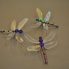 Dragonfly 7,8,9