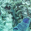 Second dive Sunday - Five Fingers reef<br /> Brown and white moray eel (I never got a shot of the head - only tail shots)