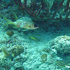 "Monday - first dive on the Mama Vina wreck.  My camera didn't work, but you can see great video that Jason (divemaster) shot on Youtube -- <a href=""http://www.youtube.com/watch?v=o0iwLg8zFZ0"">http://www.youtube.com/watch?v=o0iwLg8zFZ0</a>"