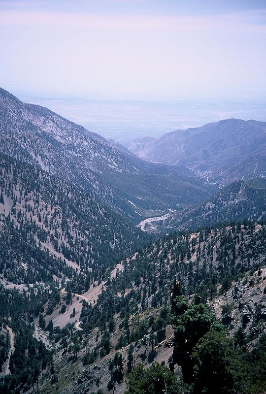 Slide 101:  View of Mt Baldy fire service road and trail leading up to the ski lodge, looking south into the San Antonio river valley.