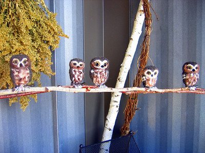 Saw-whet owls (wool birds).