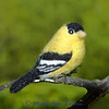 American Goldfinch - Spinus tristis - no pattern for this one yet.