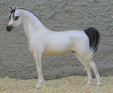 Chaney Arabian Gelding OF China by AAA