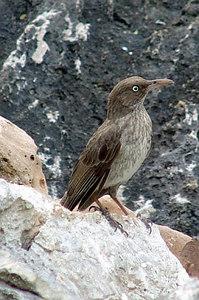 Bonaire Picture