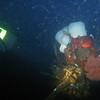 Crabs (night dive)<br /> Bruce Higgins Underwater Park, 9/27/09