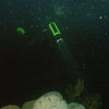 (night dive)<br /> Bruce Higgins Underwater Park, 11/1/09